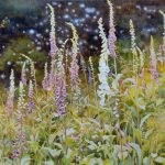 Gemälde von Julia Belot: Fingerhut, Öl auf Leinwand, 100 cm x 120 cm, 2019