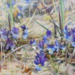 Gemälde von Julia Belot: Hornveilchen, Öl auf Leinwand, 40 cm x 80 cm, 2020