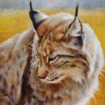 Gemälde, Tierportrait von Julia Belot: Luchs (2), Öl auf Leinwand, 35 cm x 35 cm, 2020